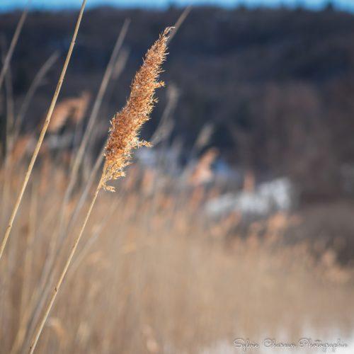 Photo format carré pour tableau ou poster, Début d'hiver floral
