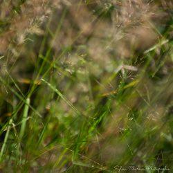 Photo format carré pour tableau ou poster,herbes folles